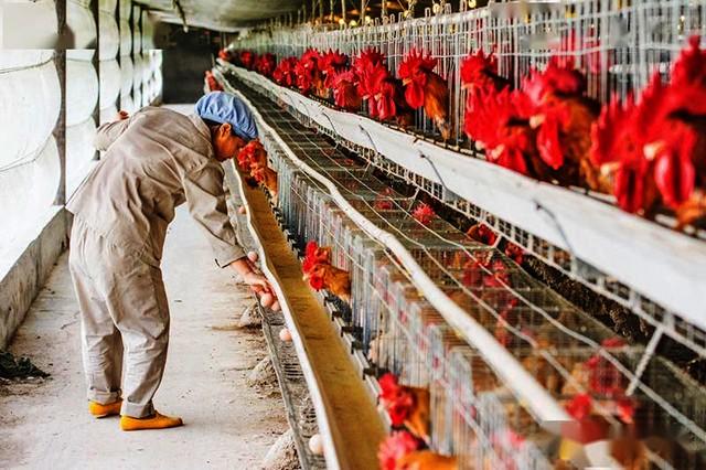 给力!畜禽舍空气源热泵环控技术纳入2020年山东省畜牧
