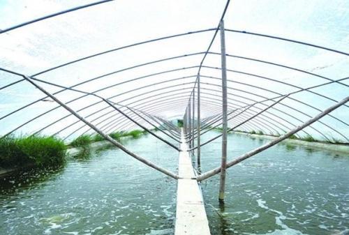 """江苏高邮:热泵应用于水产养殖,助力实现""""双碳""""目标"""